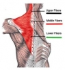 How To Make Your Back Exercises More Effective?