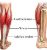 How to Build and Stretch your Calf Muscle?