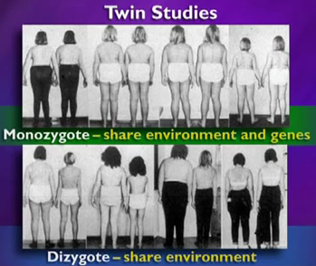 An image from twin studies featured in the talk by Jeffrey Friedman posted after the jump, or click on the image for the YouTube link