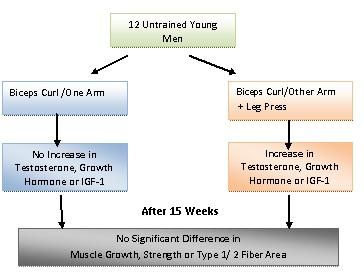 hormone hypothesis oh muscle growth