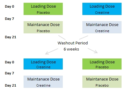 creatine DHT study design